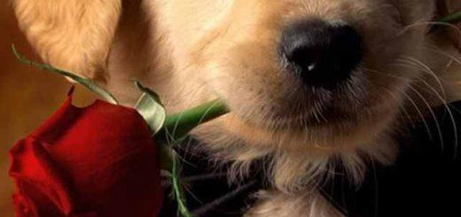 haustieranzeiger hund